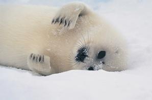 Les animaux ont des droits - le droit d'être protégés par l'homme, le droit à la vie et à la multiplication de l'espèce, le droit à la liberté et le droit de n'avoir aucune dette envers l'homme.