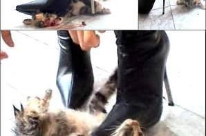 Une « femme » torture un chaton jusqu'à sa mort…