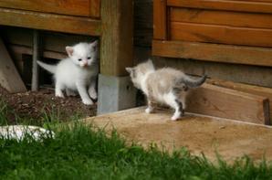 Mes bébés chats <3