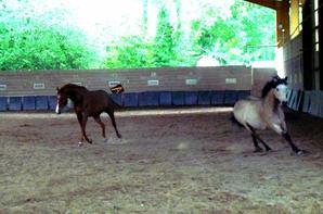 Jalza et Ulma en liberté