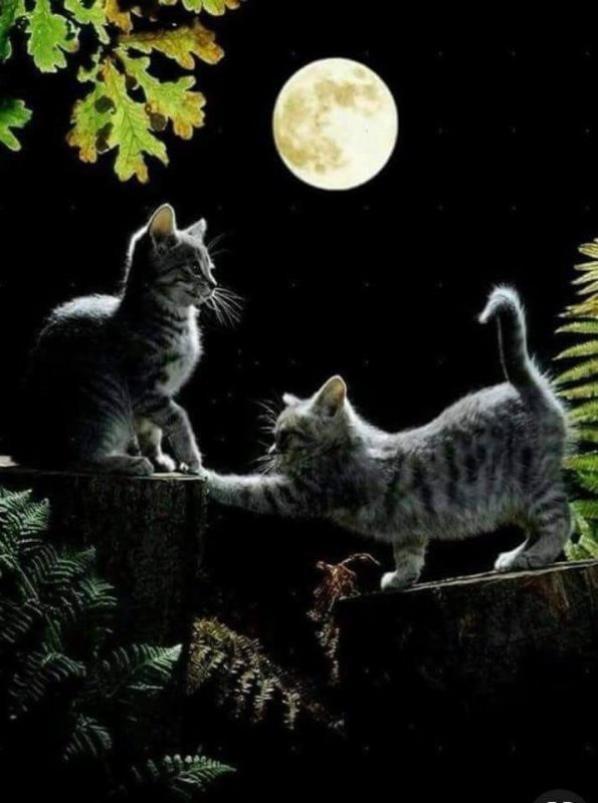 Bonne nuit à tous !!