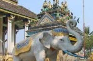 L'amour des elephant en Inde