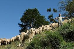 la cabane et ses  alentours (le cujala )  la cabane de berger