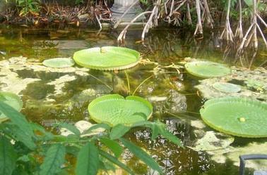 un  véritable jardin  botanique