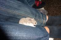 Mon hamster Pimuosse !