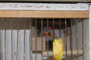 les nid sont en place