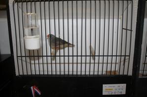 photo des mes oiseau a wallers