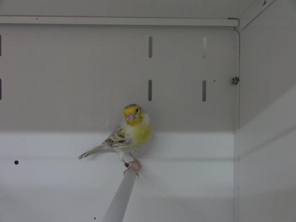 Des  oiseaux d'expo en préparation