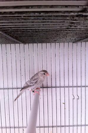 oiseaux avant mues
