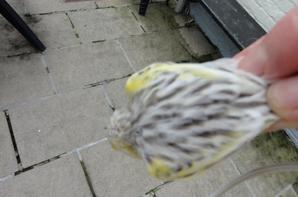 agate topaze jaune mozaique