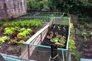 La vie du jardin continue