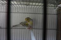 Agate topaze blanc et agate topaze jaune mosaique