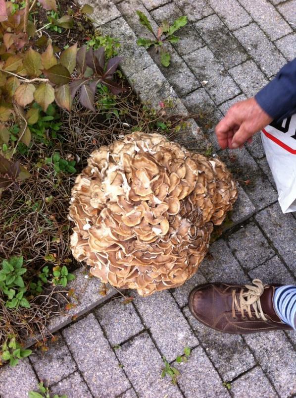 Mon voisin est allé aux champignons