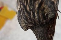 Noir rouge mosaique/ topaze brun