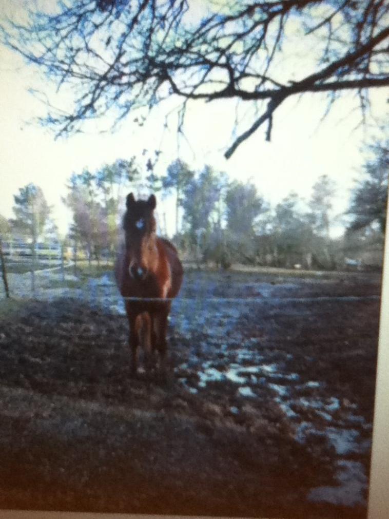 les poneys que j'adore
