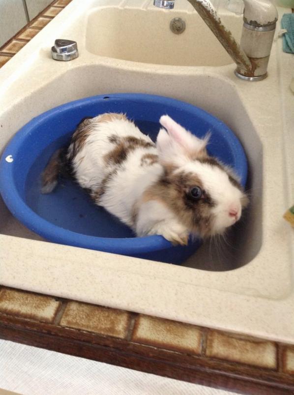 Pupuce dans son bain