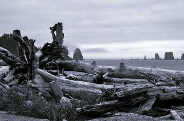 Sommaire Fictions Sur les Quileutes