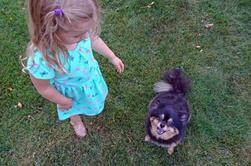 Mon chien, Boo, apprécie la compagnie d'un jeune voisin qui a autant d'énergie qu'il le fait. Et beaucoup plus d'énergie que moi. Peut-être que je devrais aller visiter plus souvent. Je sais que Boo dort mieux la nuit, ce qui signifie que je le ferais aussi
