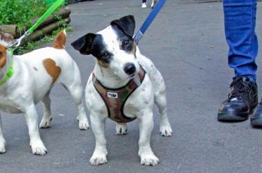 .Les canines en France et en Belgique