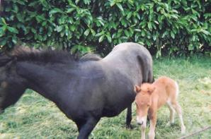 Bébé poney ♥