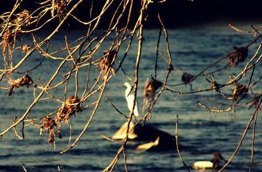 Ho des oiseaux en hiver ..