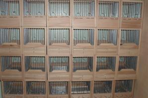 Cage de canari malinois bois heter
