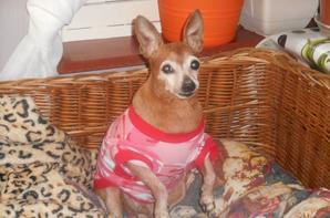 lilas 12 ans la puce es en forme mais plein d arthrose