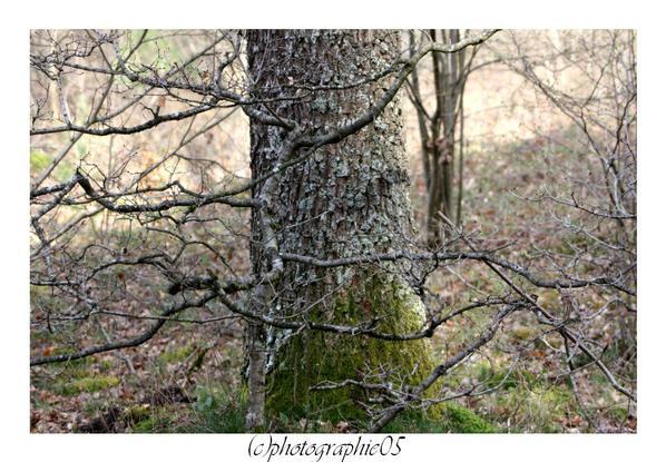 Barvaux - 11 avril 2012 - en forêt