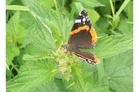 Papillon + ma vieille jument <3 + fleurs