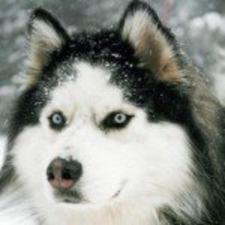 les yousky des neige