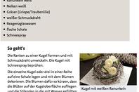 Geschlungene Kugel mit weißen Ranunkeln - ARD-Buffet :: Kreativ