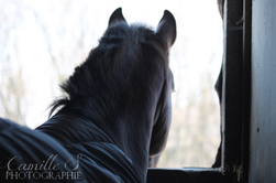 Vrac Equestre II