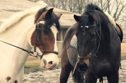 Vrac Equestre III
