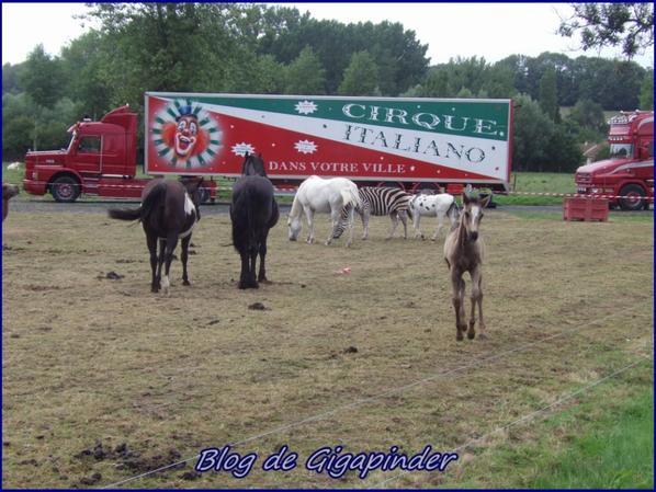 SUR LA ROUTE DES CIRQUES  AVEC JP ( PINDER62600 )  ITALIANO
