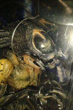 Figurines Alien vs Predator