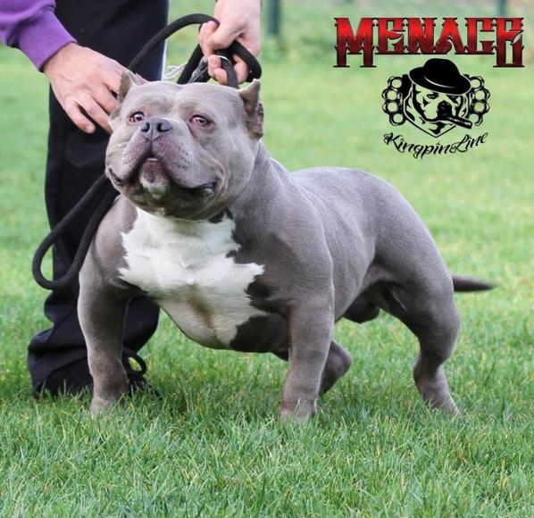 KINGPINLINE MENACE  G2 SON