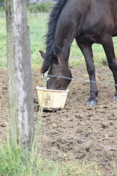 """Si quelqu'un te dit c'est juste un cheval, contente toi de lui sourire, il ne peux pas comprendre."""""""