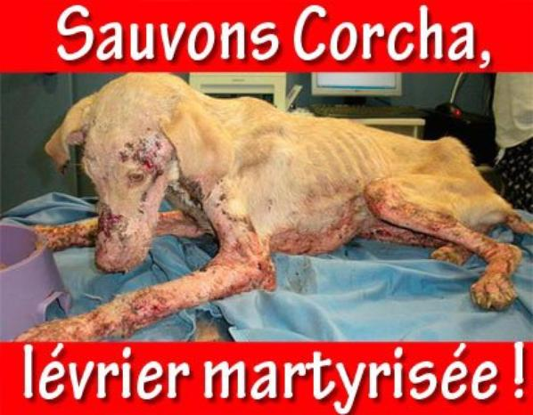 Corcha