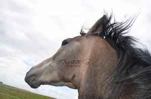 J'ai juste un cheval merveilleux !!