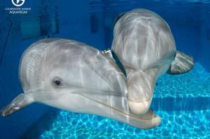 mes amis les dauphins