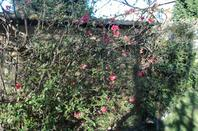 @Bonjour mes amies et amis petit tour dans mon jardin@