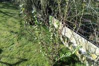 Suite de la visite de mon petit Jardin Dany votre ami