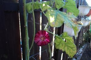 Suite de la visite de mon petit Jardin ce 20/03/2014- Dany votre ami