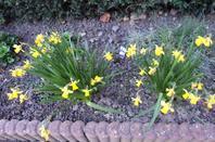 @Petit tour sur le parterre de devant la maison pour vous souhaiter une très belle fin d'après midi