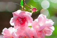 Pour mes amies et amis Quelques petites Beautées de la Nature