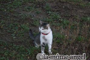 les chats (1) meuh et ninette