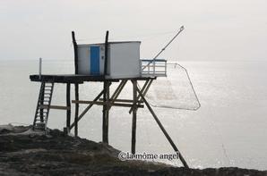 carrelets et méduse a saint palais sur mer
