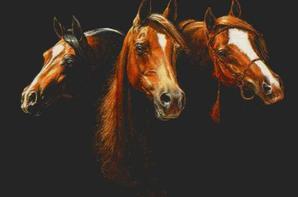 la beauté de chaque vie des chevaux  et de son élégance