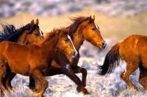 lees chevaux