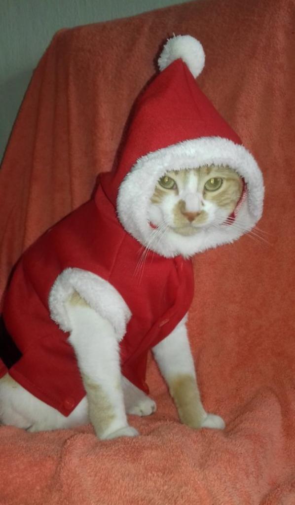 Mia en mère Noël  ?
